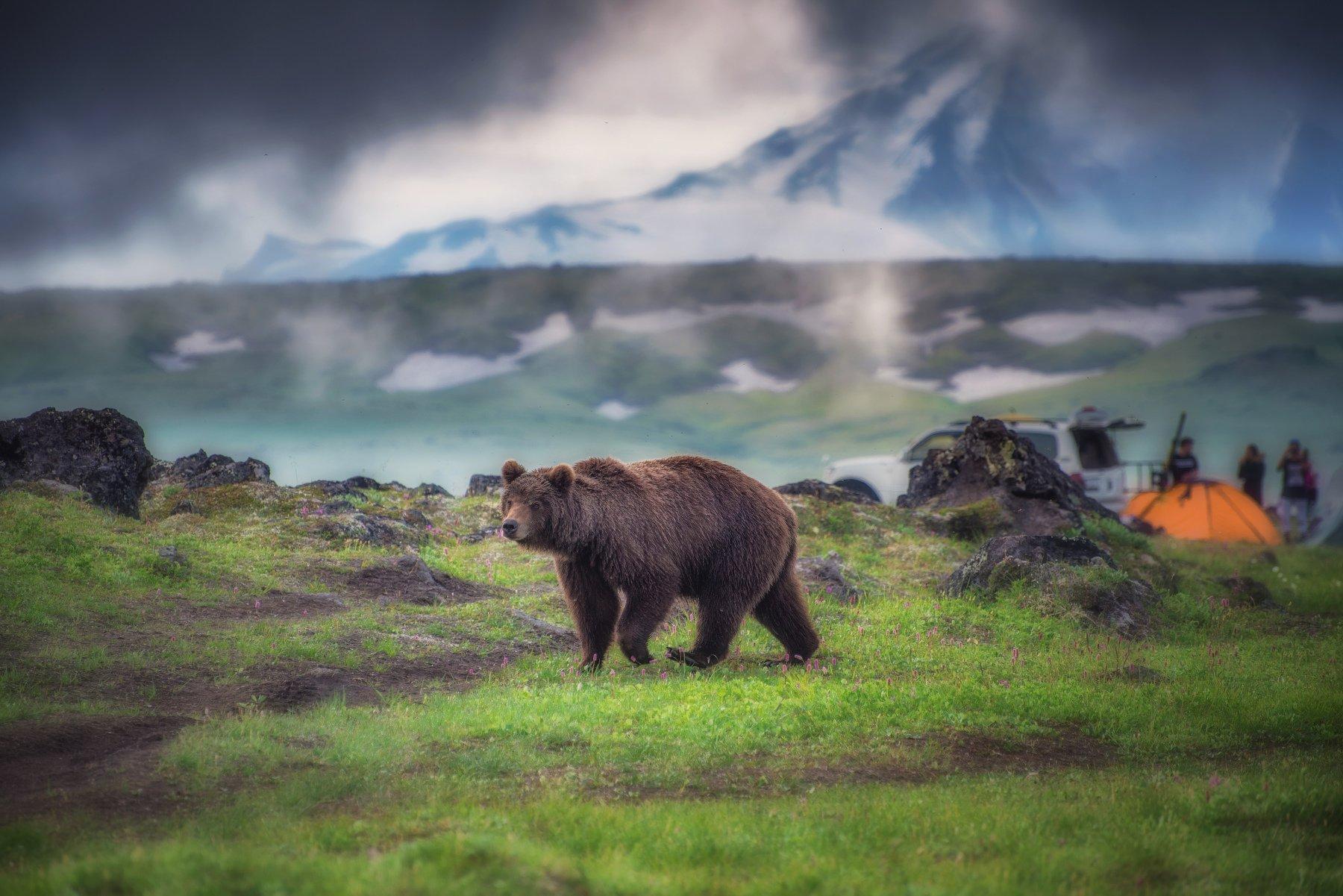 камчатка,медведь, Кретов Алексей
