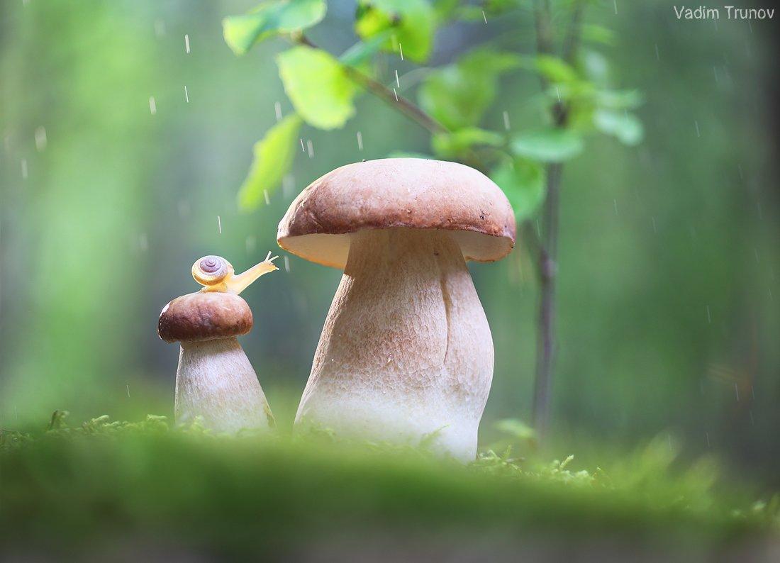 улитка, белый гриб,  макро, Вадим Трунов