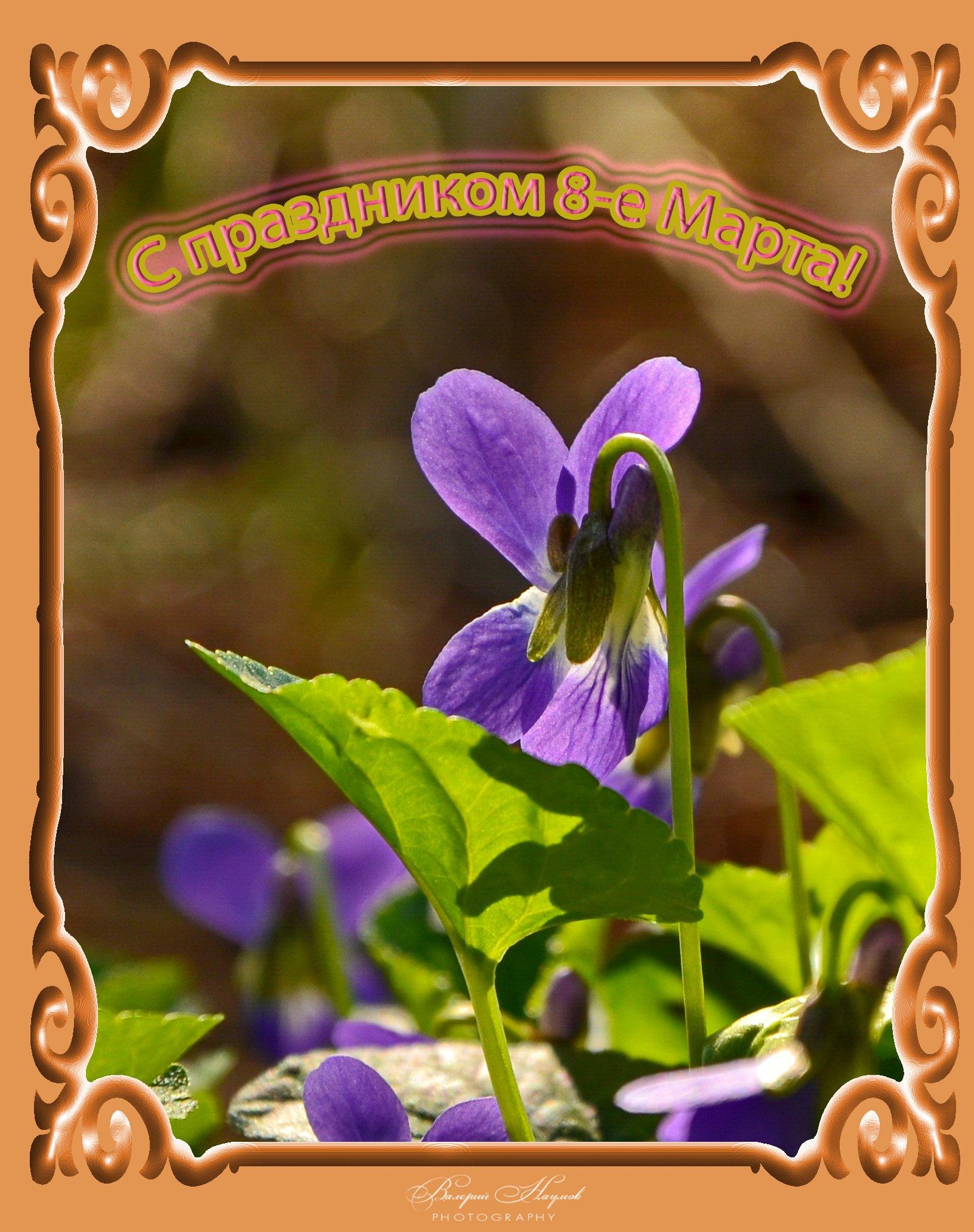 весна, март, праздник, открытка, Валерий Наумов