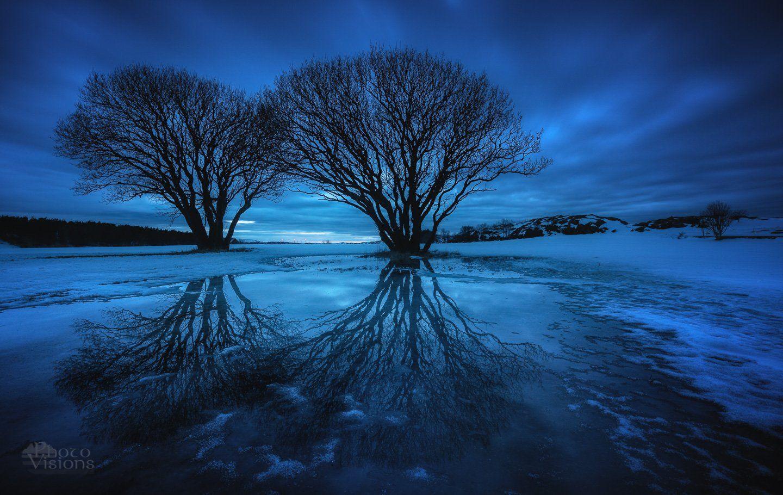 trees,night,norway,tree,blue hour,evening,, Szatewicz Adrian