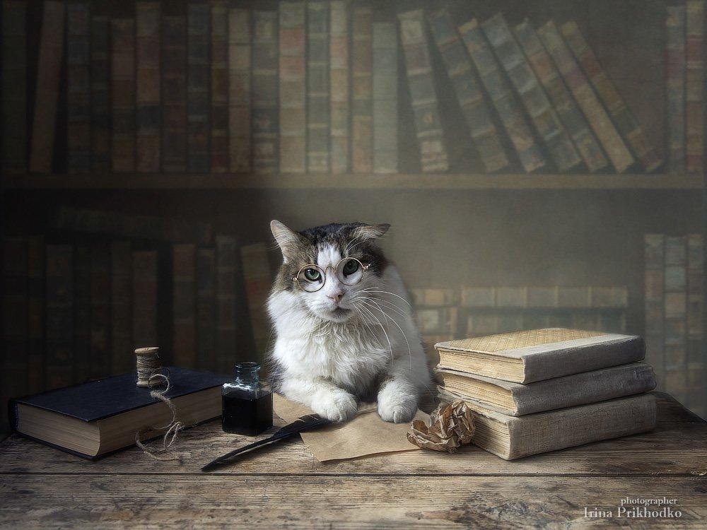 постановочная фотография, кот Лёва, книги, домашние животные, Приходько Ирина