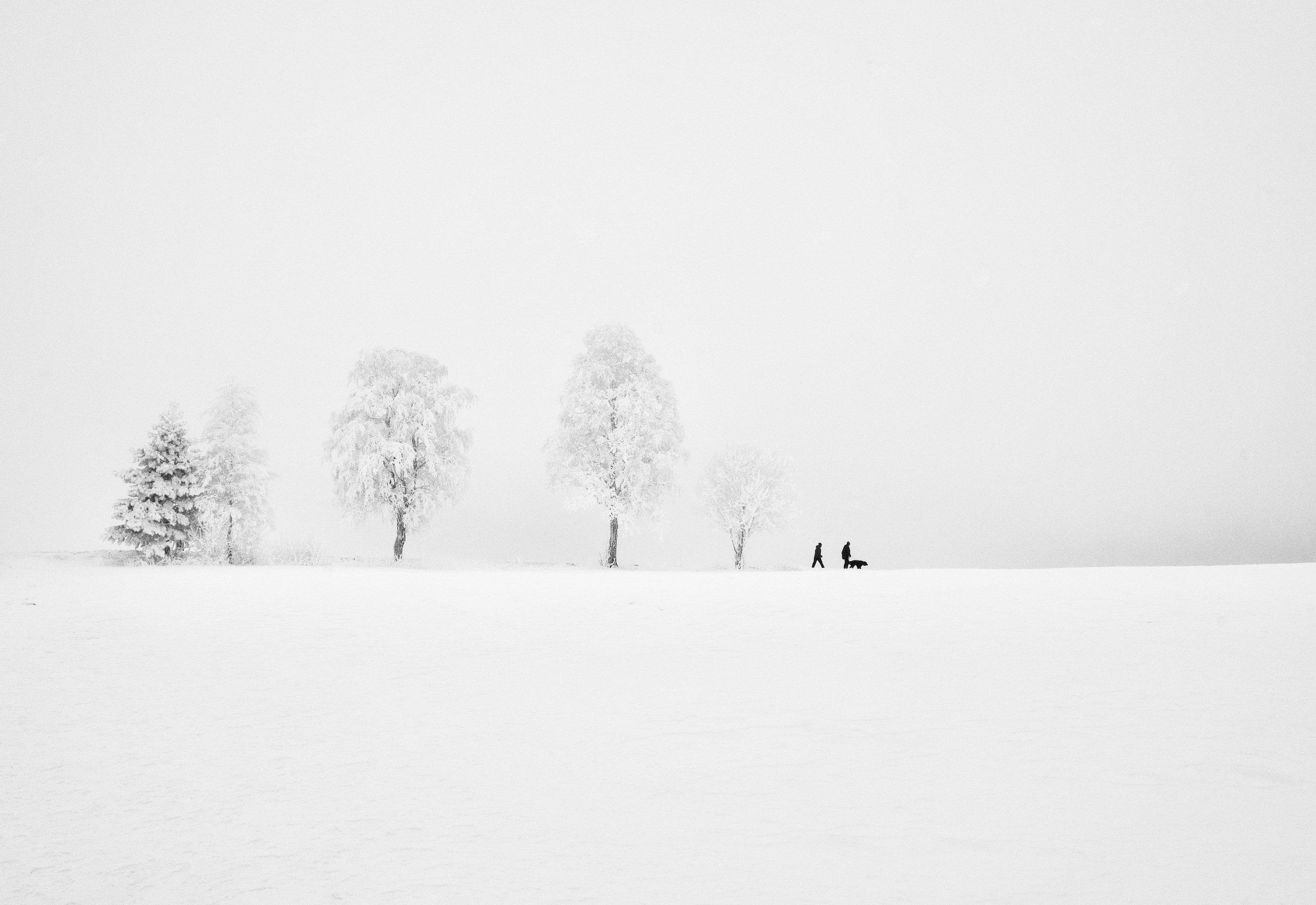 Black & White, winter, people, animals, dog, walk, trees, frost, cold, Norway, white, snow, , Povarova Ree Svetlana