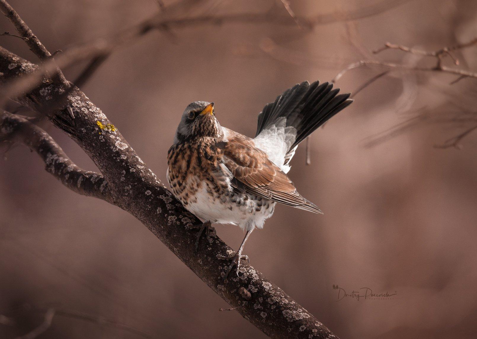 природа, лес, поля, огороды, животные, птицы, макро, Посевич Дмитрий