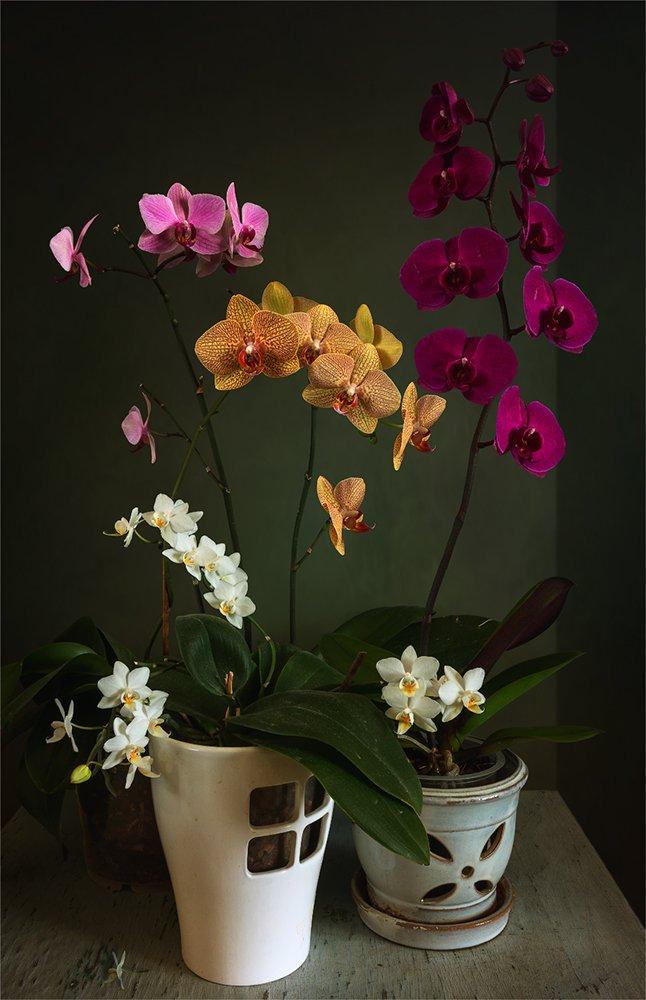 still life, натюрморт,    винтаж,    цветы,  орхидея,, Шерман Михаил