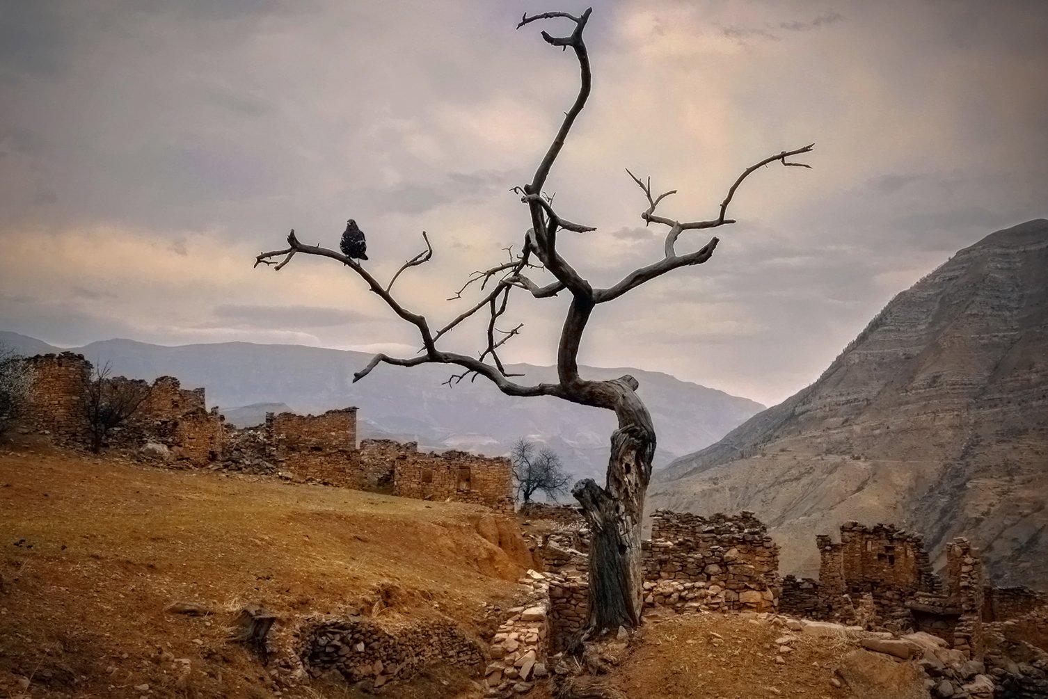 горы,аул,старый аул,хиндах,вершины,пейзаж,небо,деревья,дагестан,природа, Magov Marat