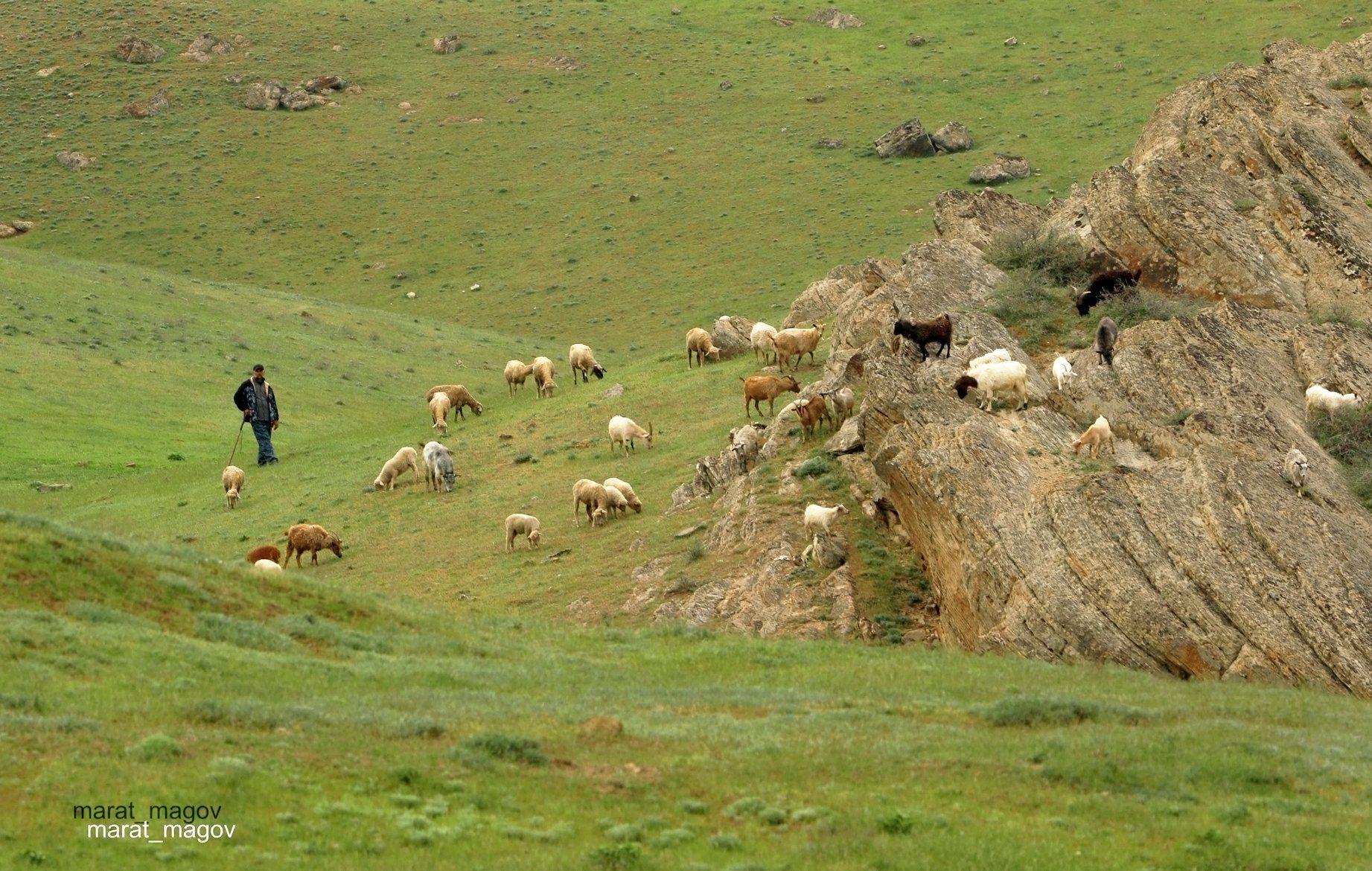 пастух,отара,горы,вершины,пейзаж,небо,деревья,дагестан,природа, Magov Marat