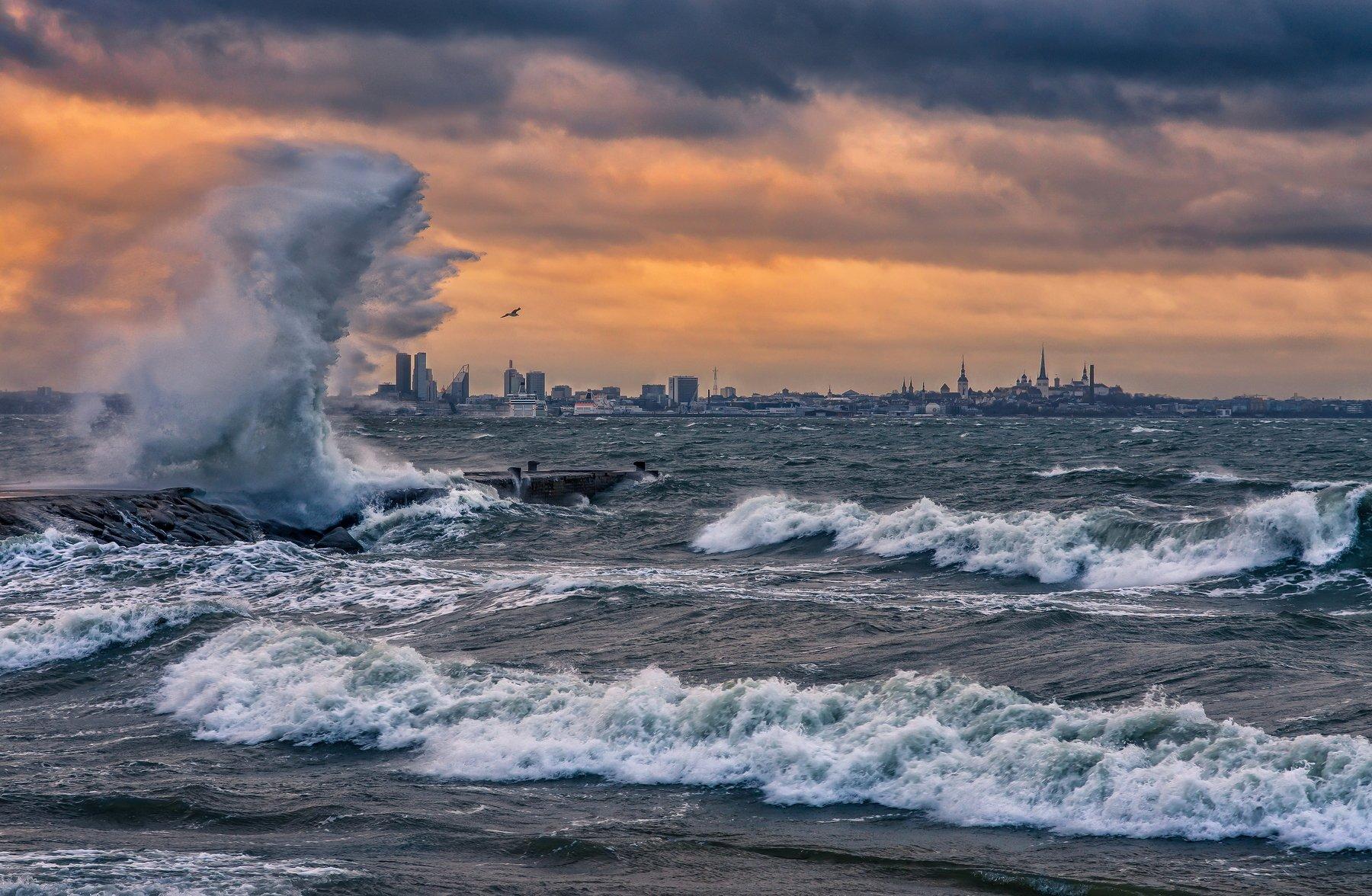 таллинн эстония балтика балтийское море финский залив пейзаж путешествие шторм ветер волны, Сергей Давыдов