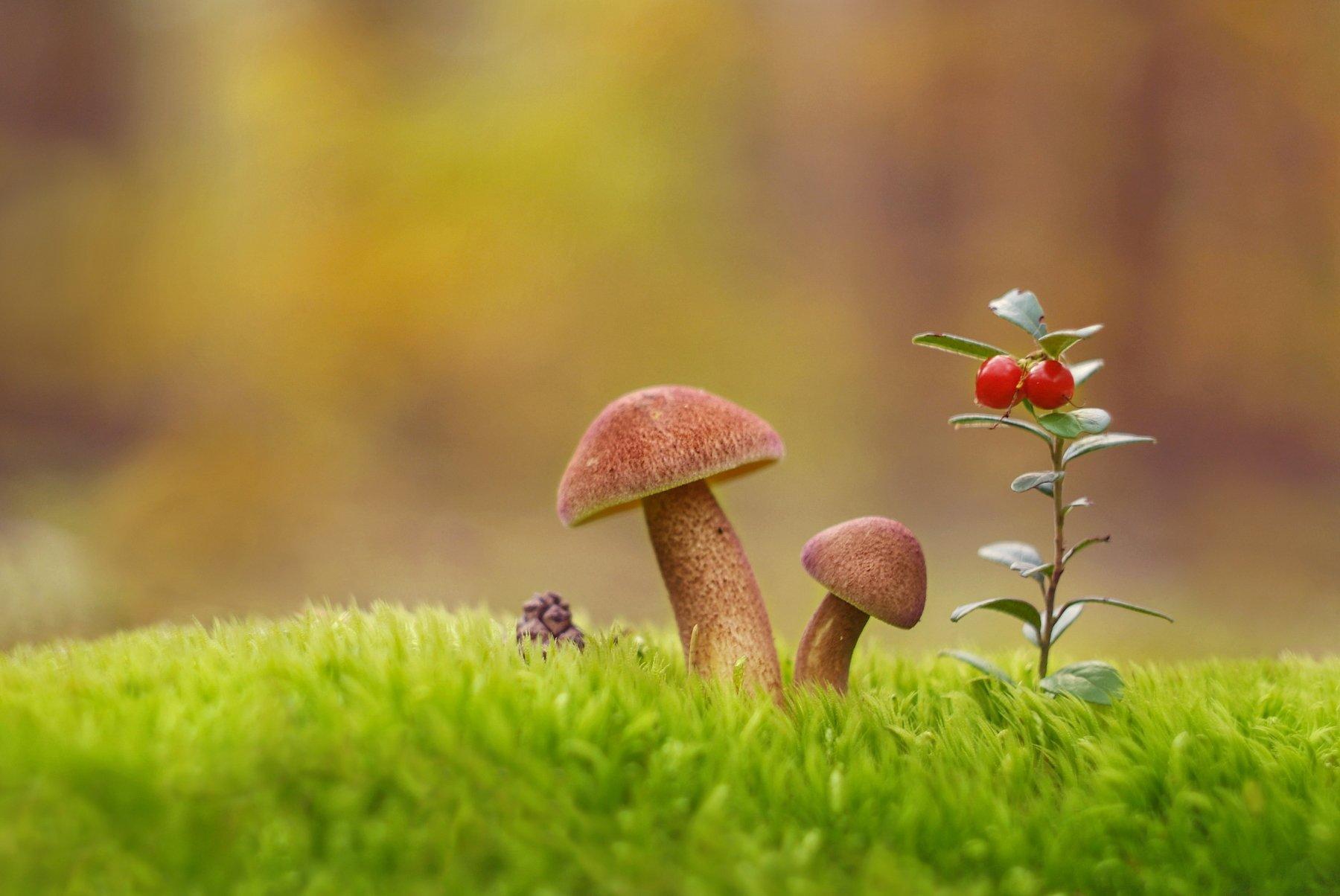грибы, природа, гелиос, Александр Гвоздь