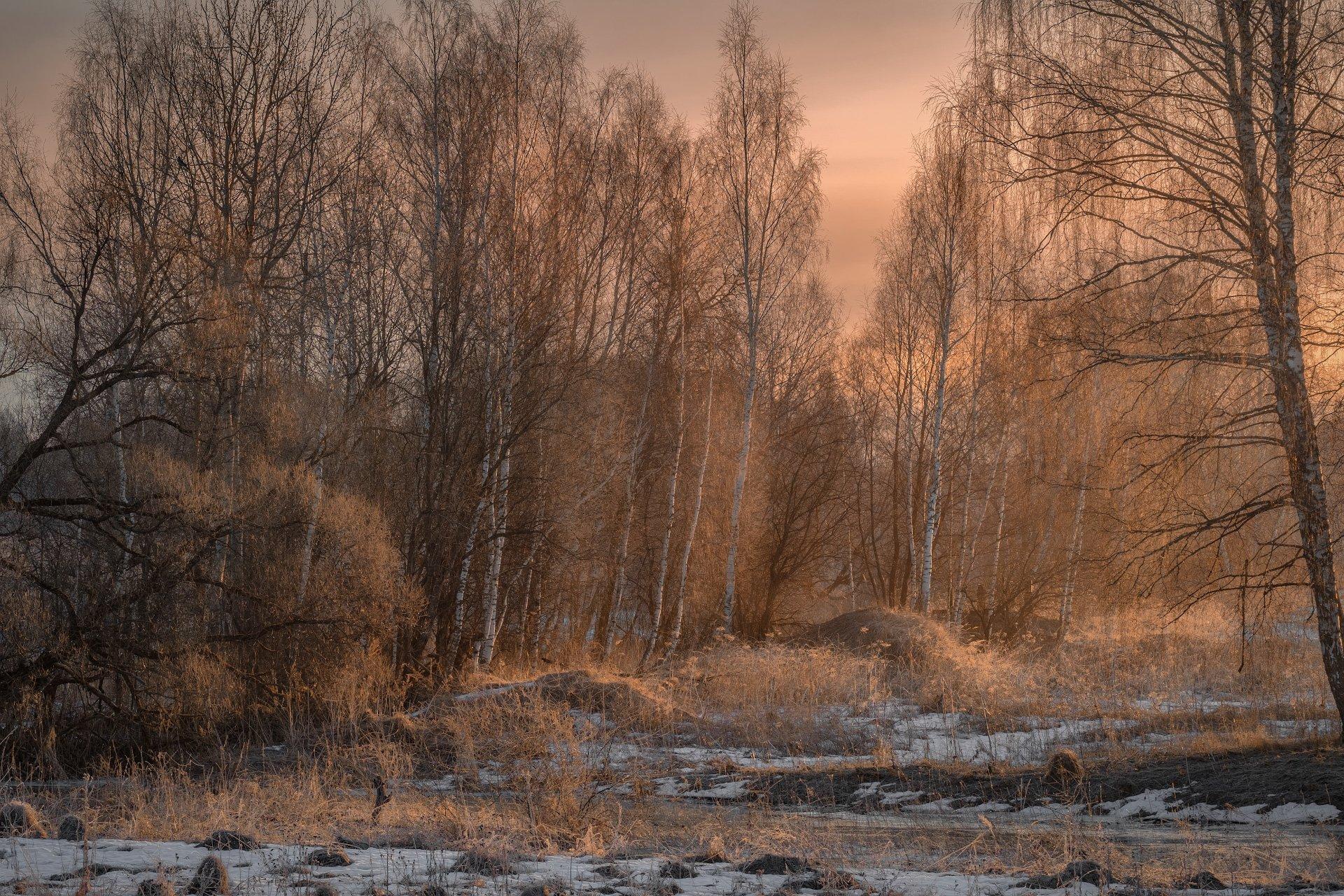 пейзаж, весна, речка, лопасня, разлив, утро, рассвет, деревья, Андрей Чиж