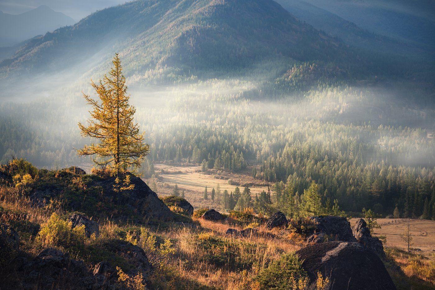природа, nature, пейзаж, landscape, горы, mounts, mountains, тайга, taiga, лес, forest, дерево, tree, rocks, камни, mist, fog, morning, туман, дымка, утро, прохладное, chilly, cool, early morning, раннее, big, high, большой, высокий, лиственница, larix, в, Дмитрий Антипов