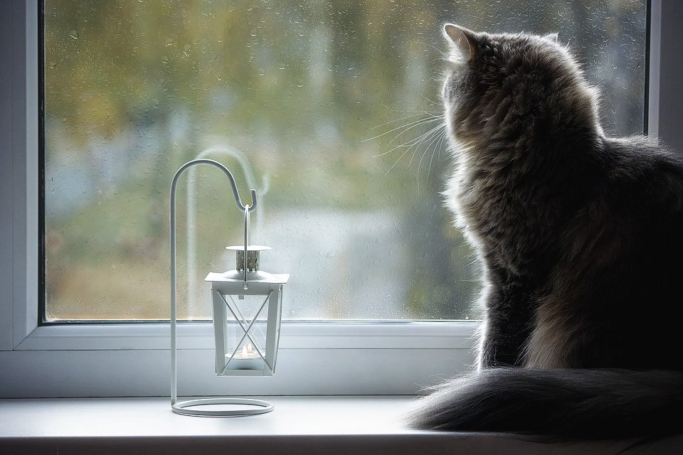 домашние животные, кошки, дом, окно, осень, дождь, кошка Масяня, Ирина Приходько