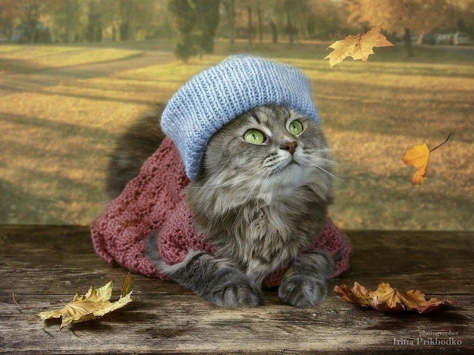 домашние животные, кошка Масяня, портрет, модель, осень, листопад, Ирина Приходько