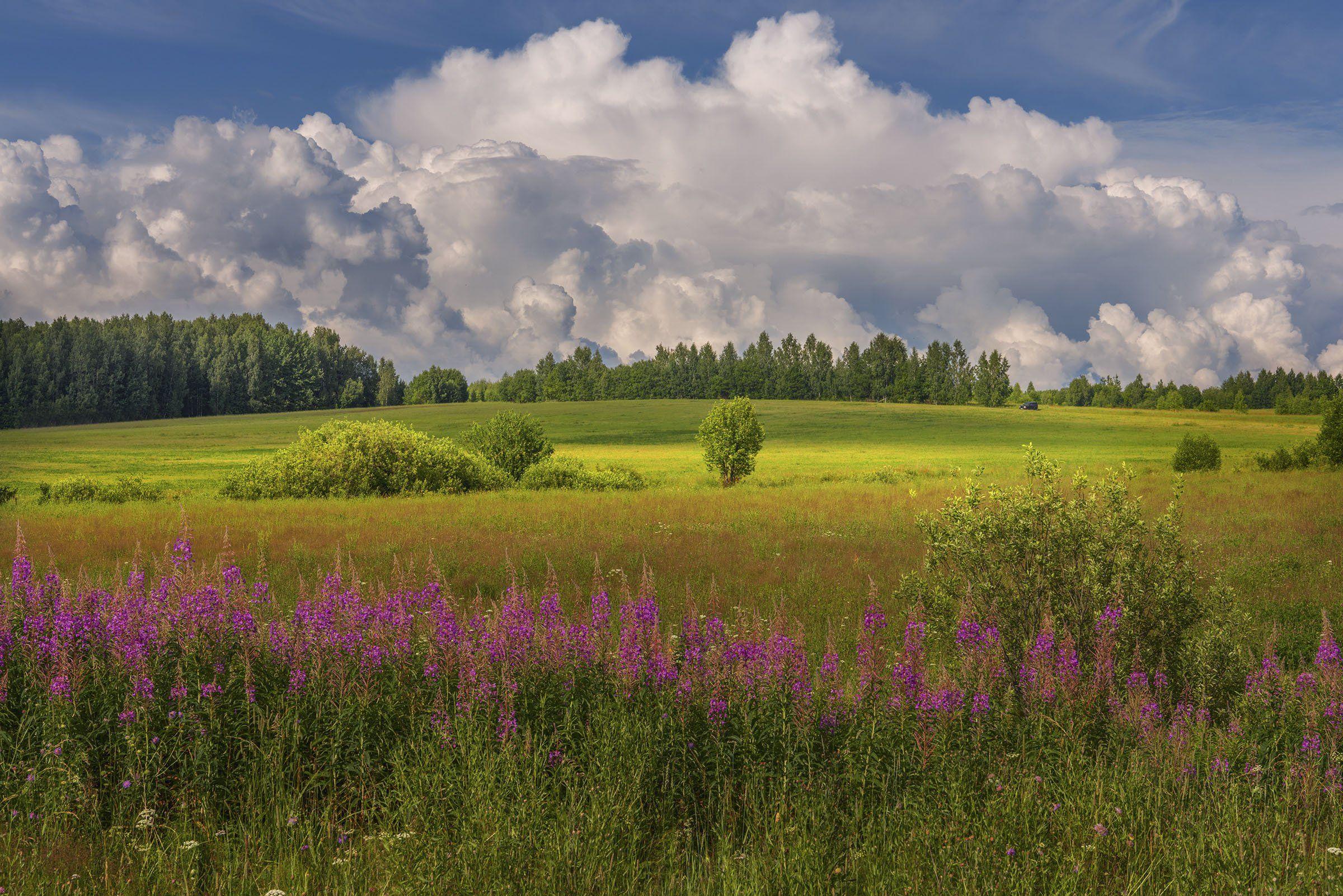 Фототуры с Владимиром Рябковым, Нижежегородская область, лето, природа., Владимир Рябков