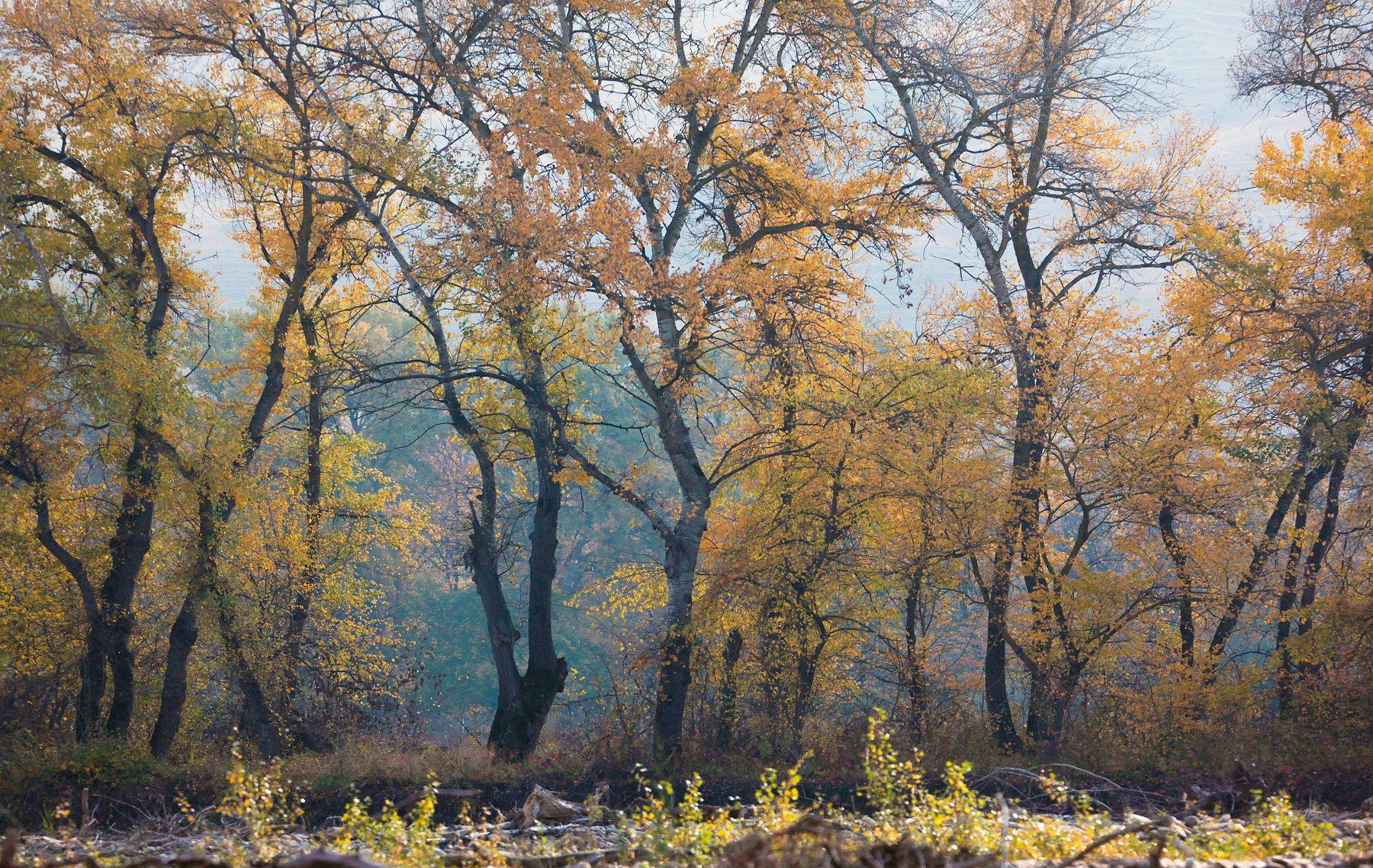 осень,деревья,день,пейзаж, Марат Магов