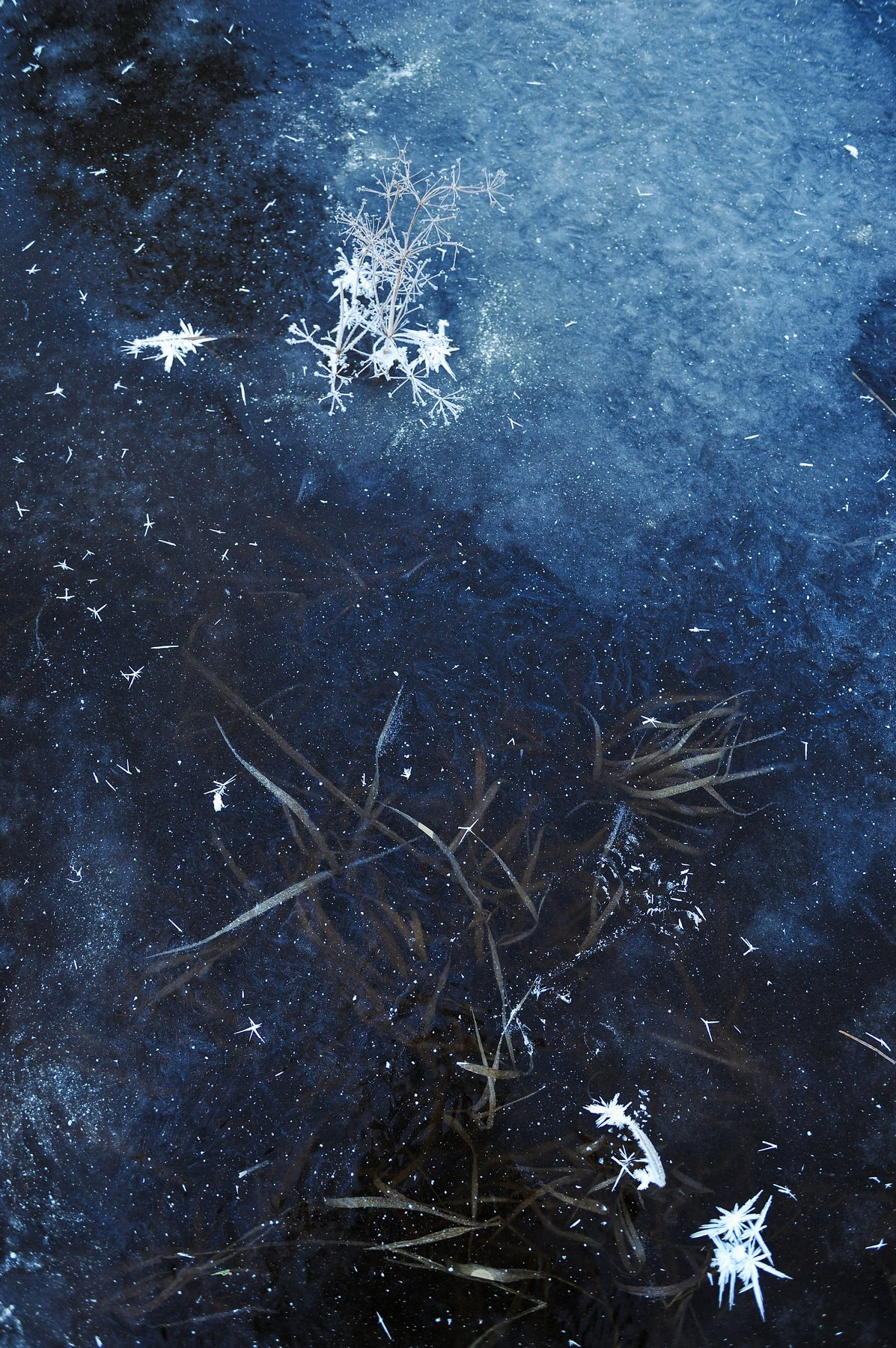 природа вода водоем озеро пруд растение растительность узор абстракция паттерн текстура воздух пузырьки толща лед мороз зима осень, Григорий Пиль