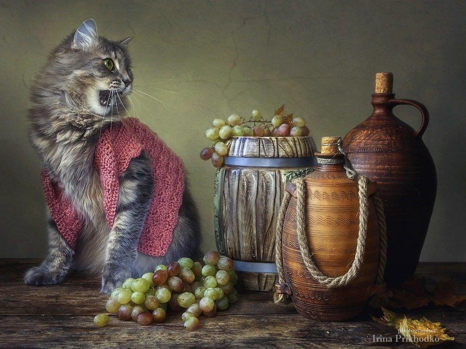 художественное фото, домашние животные, котонатюрморт, кошка Масяня, виноград, осенний натюрморт, Ирина Приходько