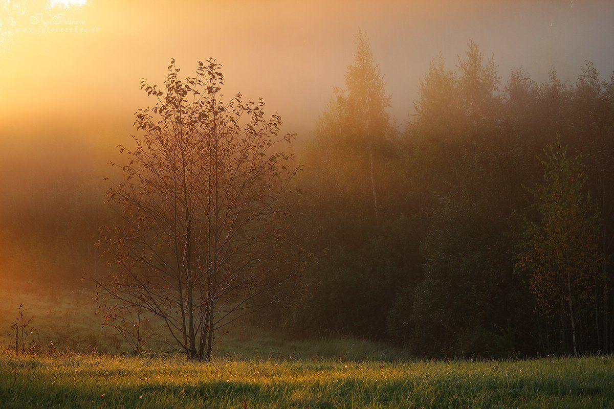 тихая спокойная осень, Инга Иванова