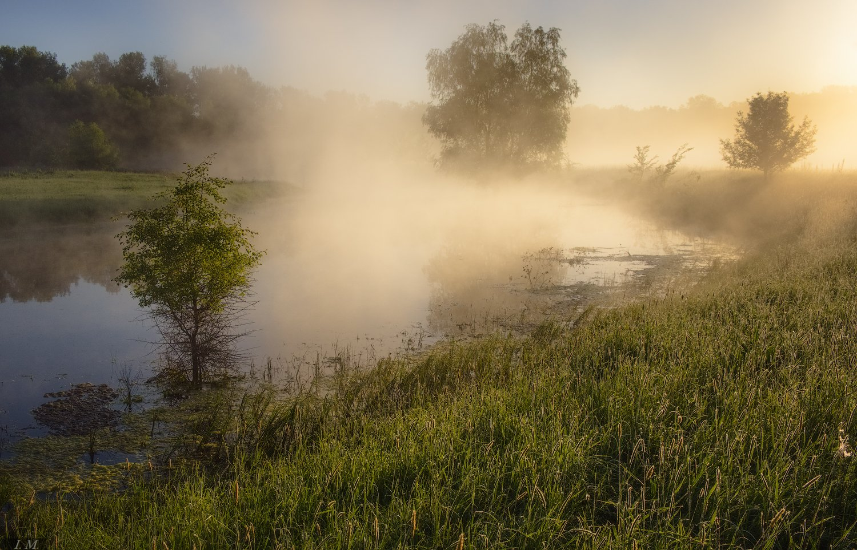 утро, туман, Туманное утро, свет, озеро, травы, лето, тепло, light, colors, Summer, morning, foggy, natural light, Misty, fog, sunlight, warm, , Ivan Maljarenko