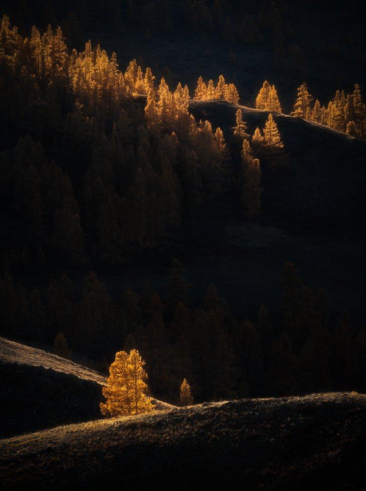 алтай, пейзаж, осень, Александр Кукринов