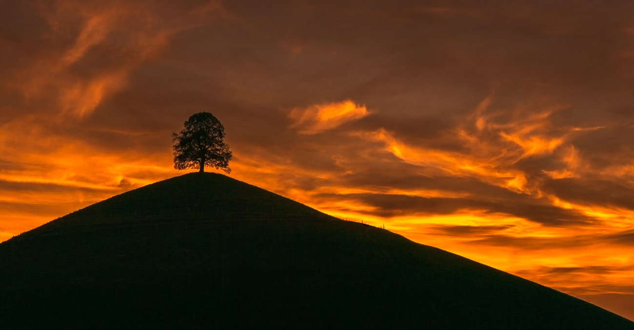 Швейцария, пейзаж, закат, дерево, холмы, природа, Лариса Николаевна Дука