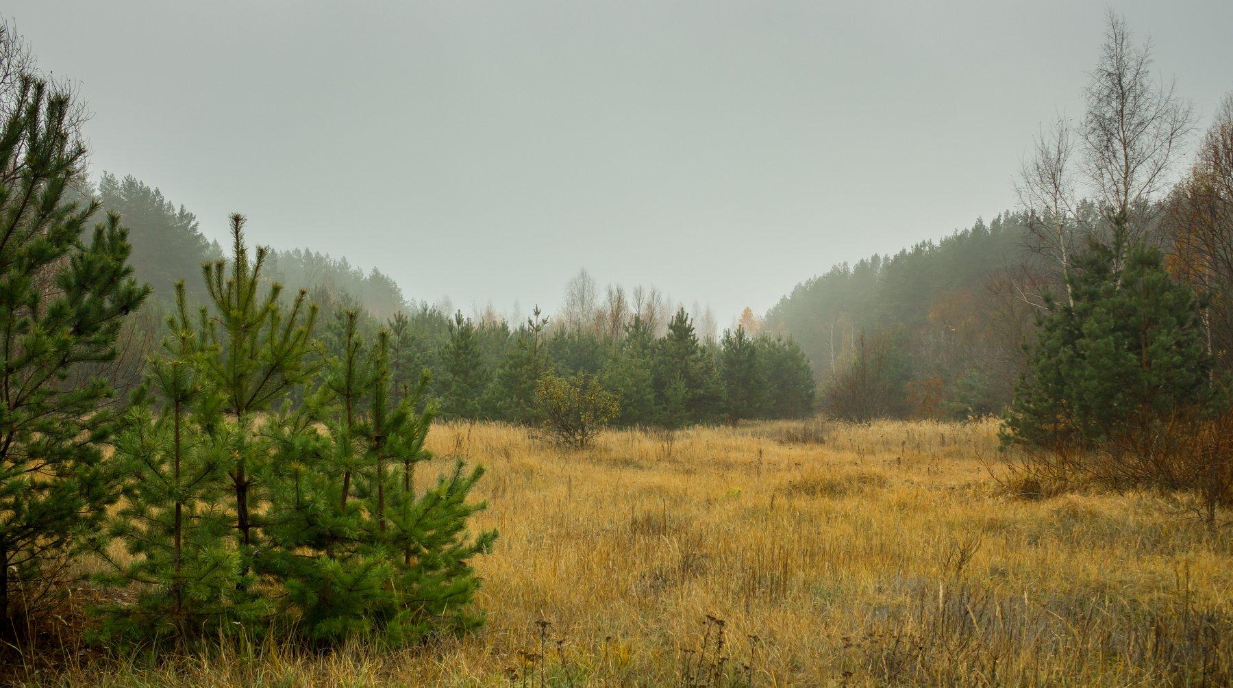 осень, лес, туман, сосны,, Руслан Востриков