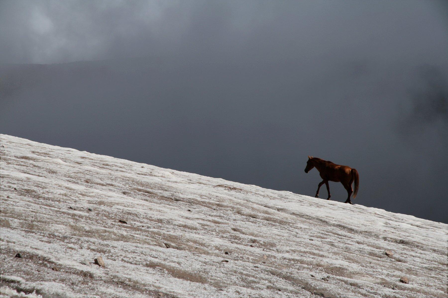 лошадь, ледник, горы, казбек, грузия, horse, glacier, mountains, kazbek, georgia, альпинизм, mountaineering, Serg Pechenizhskiy