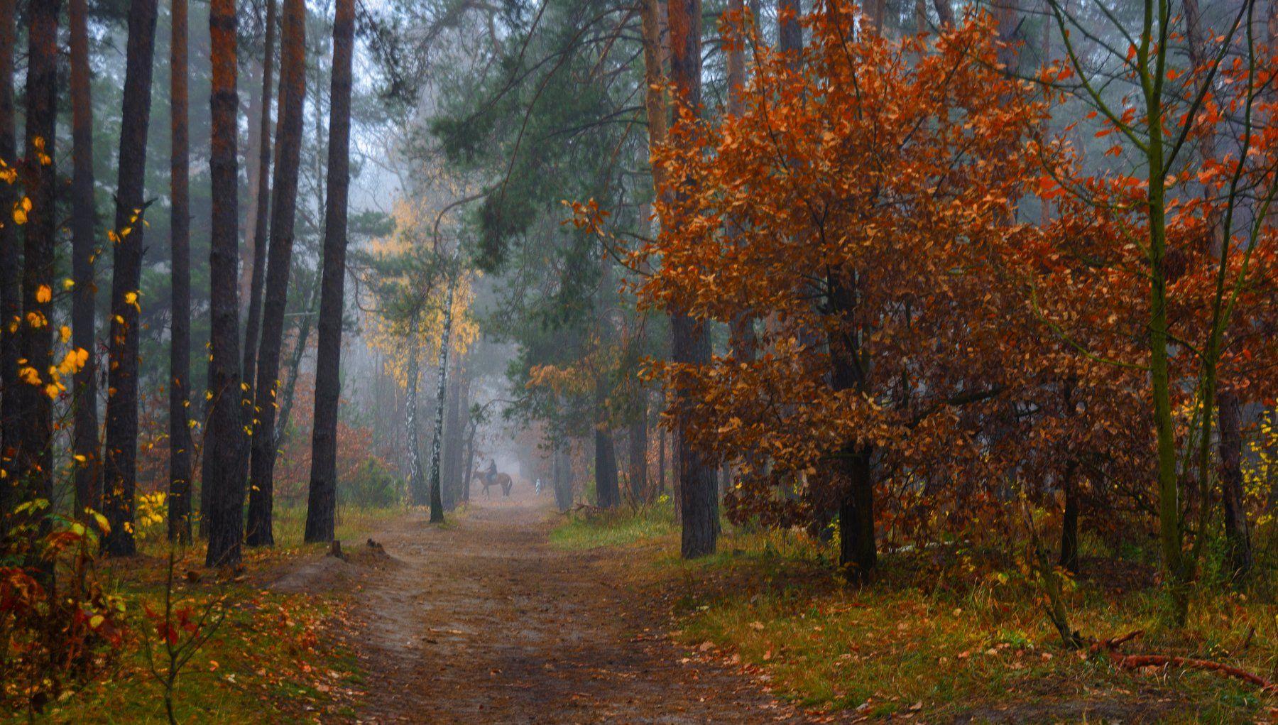 landscape, пейзаж,  лес,  деревья,  природа,    тропинка, прогулка, осень,  осенние краски, туман, дорога, всадник, лошадь,, Михаил MSH