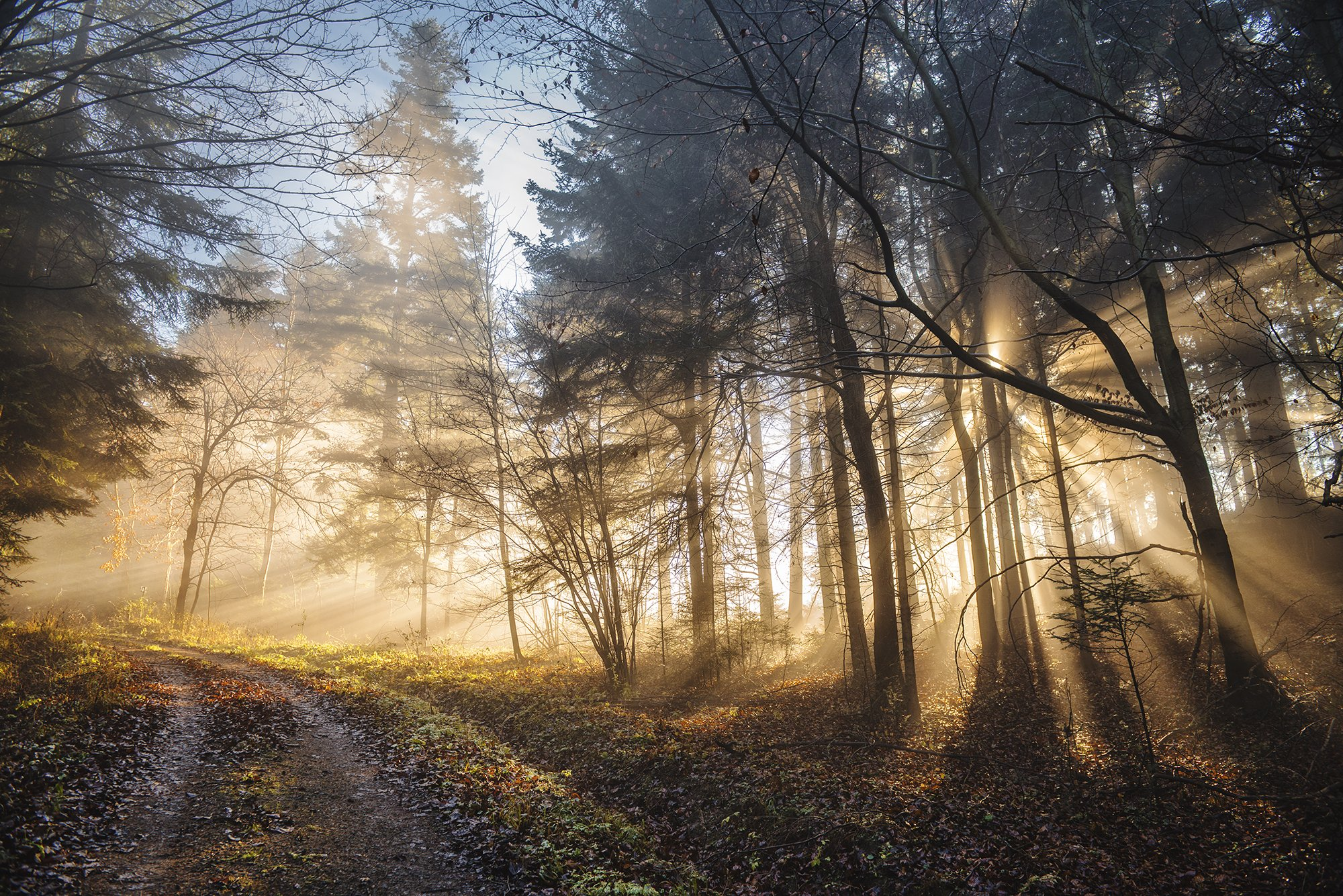 mountains, poland, slovakia, tatry, pieniny, light, sunrise, sun, light, landscape, autumn, warm, colors, fall, forest, wood, trees, Bieganski Patryk