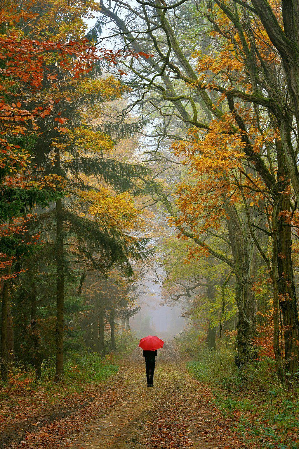 autumn walk fall magic trees path mist foggy dranikowski forest alone, Radoslaw Dranikowski