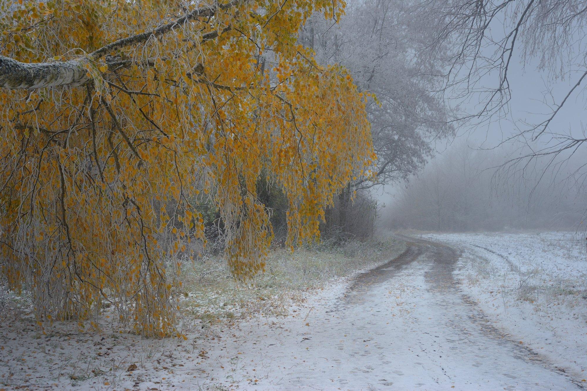 осень лес деревья листья туман, Александр Жарников