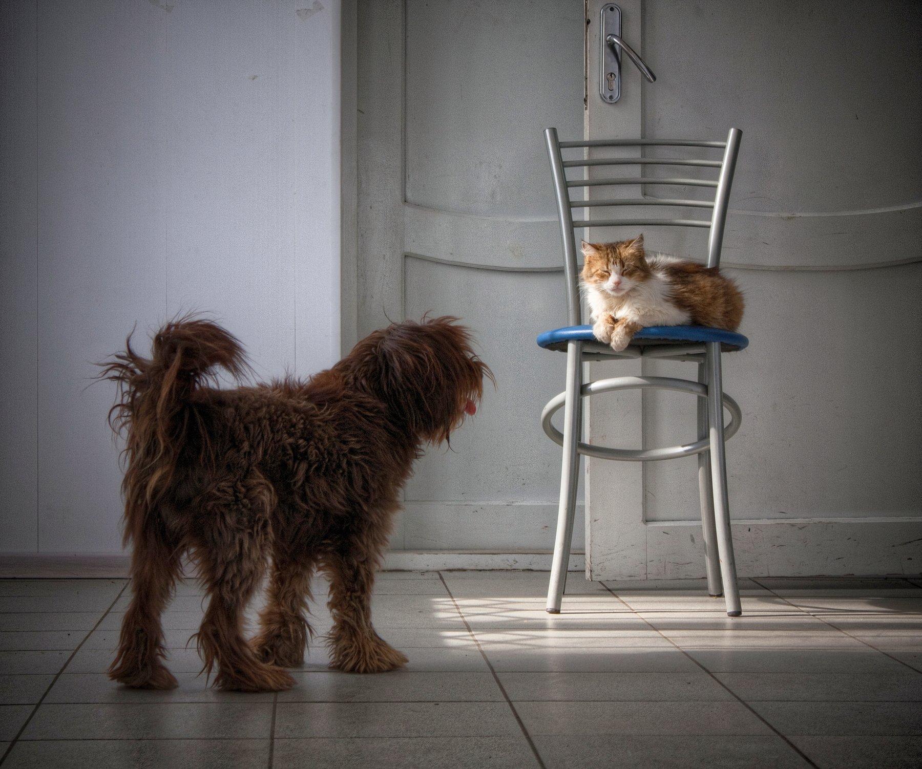 кот, собака, кошка, стул, сон, коты, Vladimir Kedrov