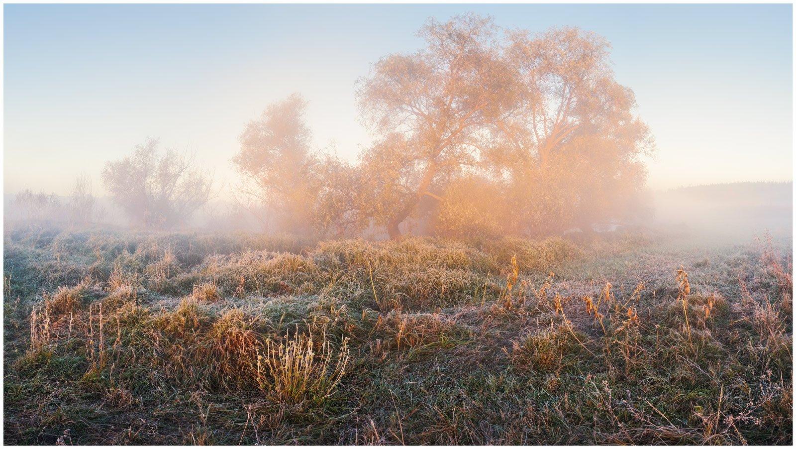 утро, туман, рассвет, осень, заморозок, изморозь, луг, Станислав Саламанов