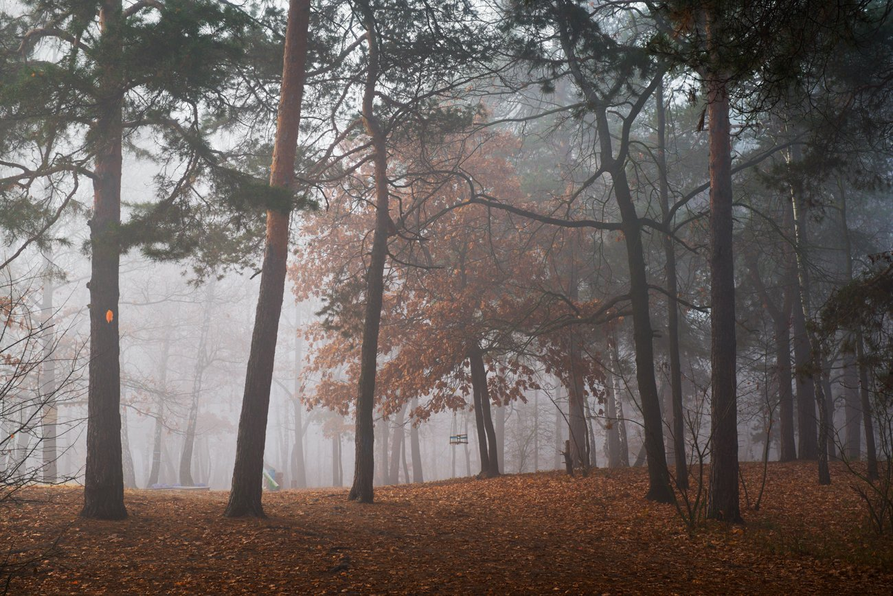 лес, осень, ноябрь, туман, Галанзовская Оксана
