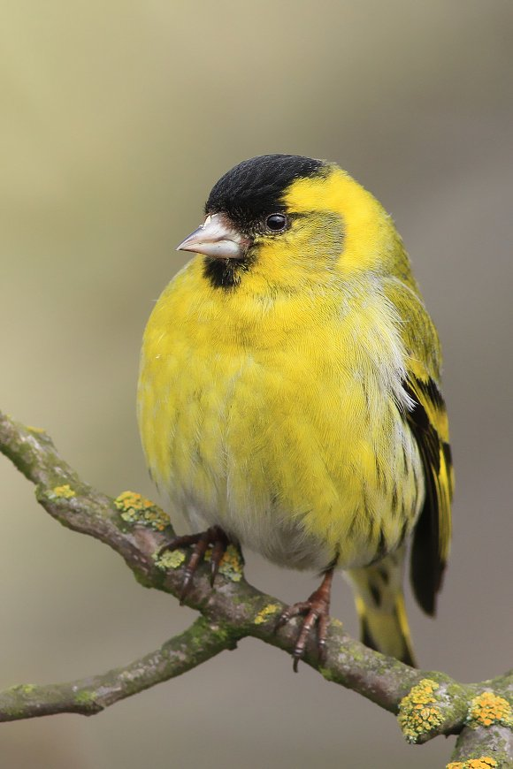birds,wildlife,animal,wild,scene,bird,nature,beauty,natural,forest,morning, Piotr Górny