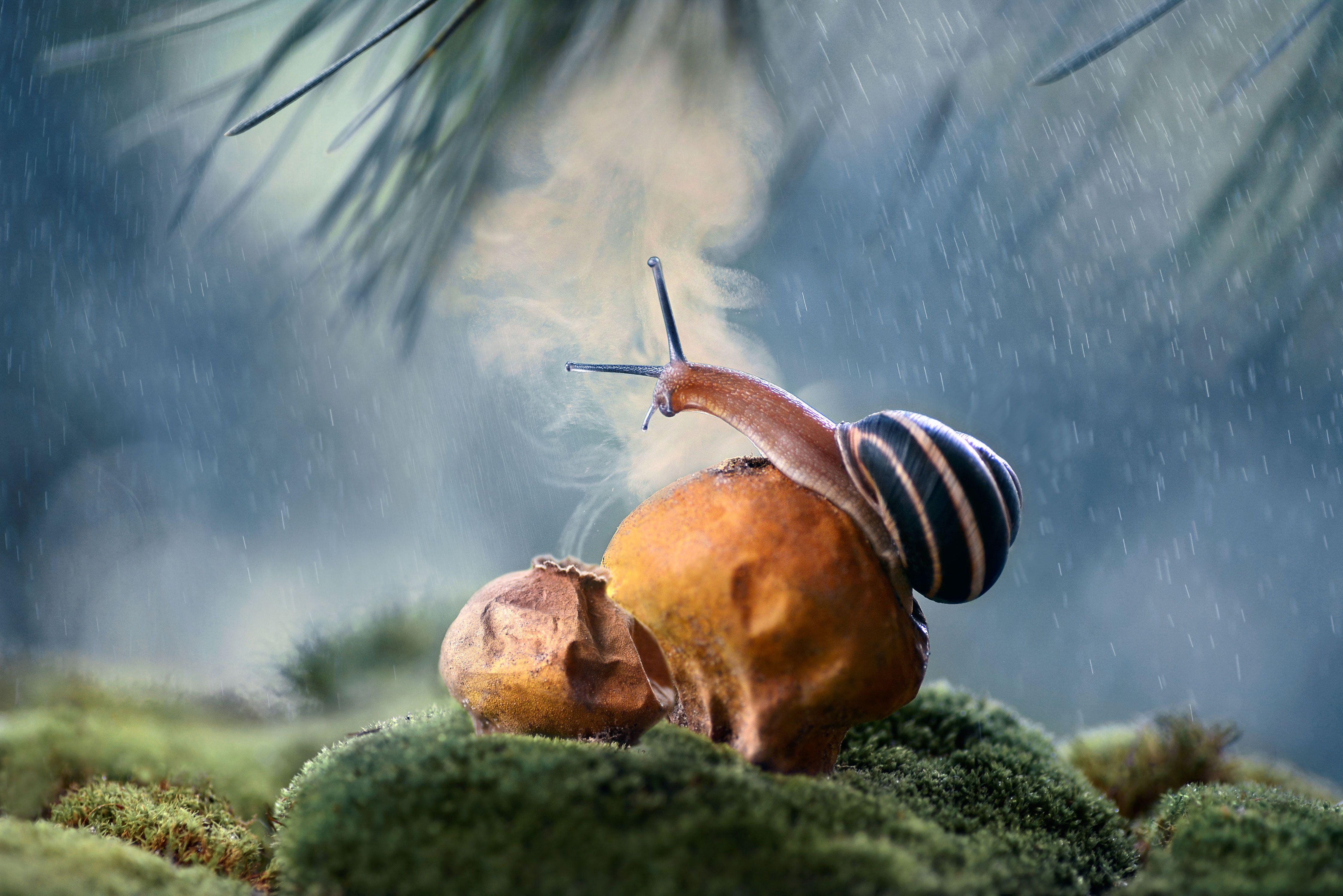 улитка, макро, споры, грибы, дождевик, природа, Чернобай Анна
