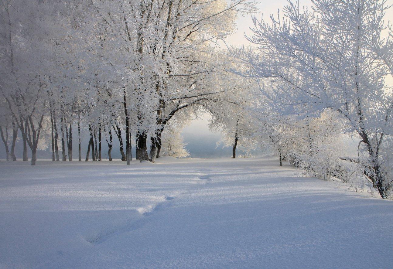 сибирь, зима, снег, мороз, томь, новокузнецк, иней, Галина Хвостенко