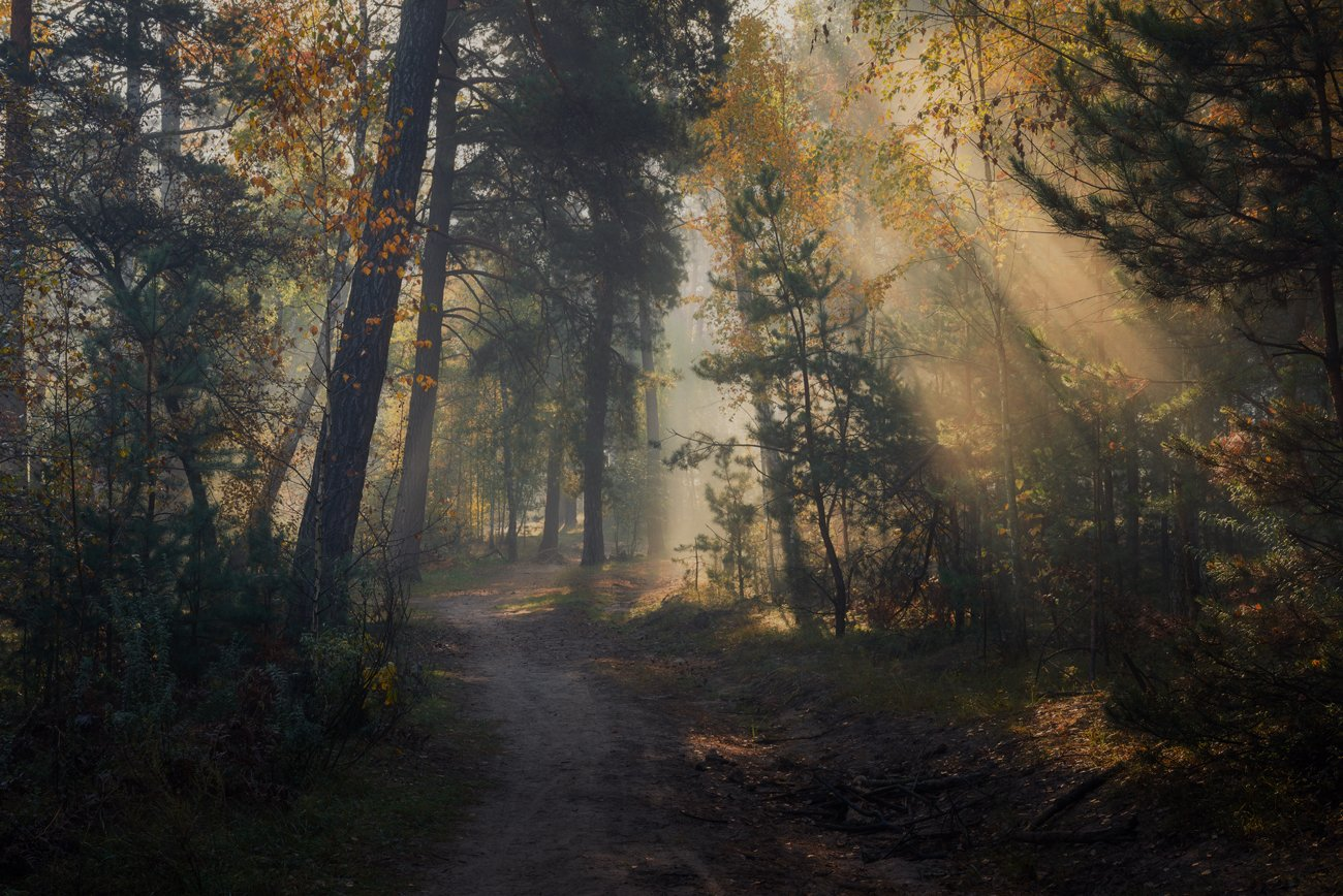 лес, осень, ноябрь, туман, лучи, Галанзовская Оксана