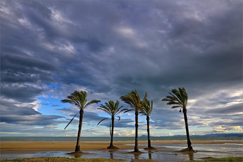 пляж, зима, небо, облака, пальмы, море, Sergey Drobkov