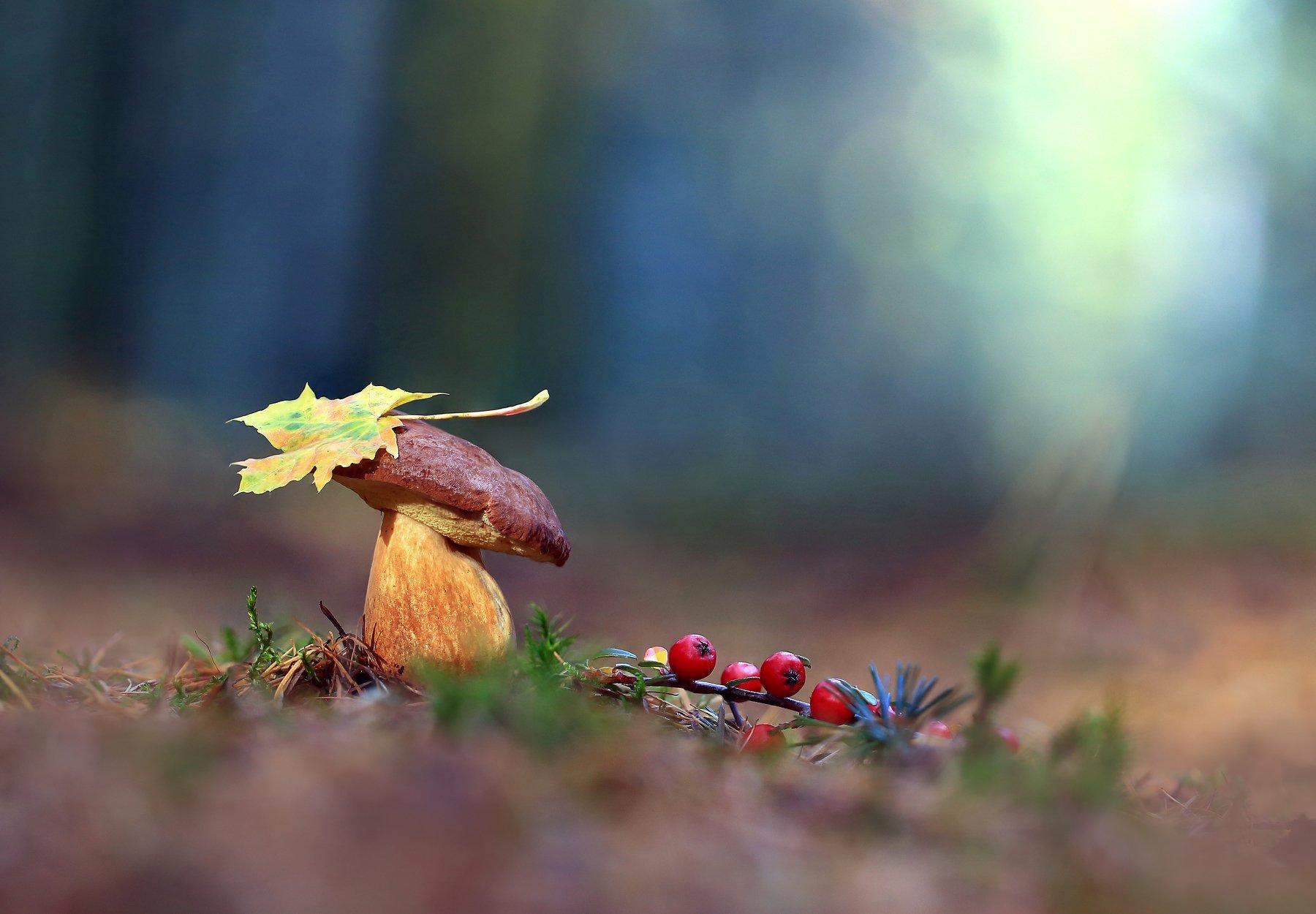 Осень, Гриб,Лес., Viktor Schneider