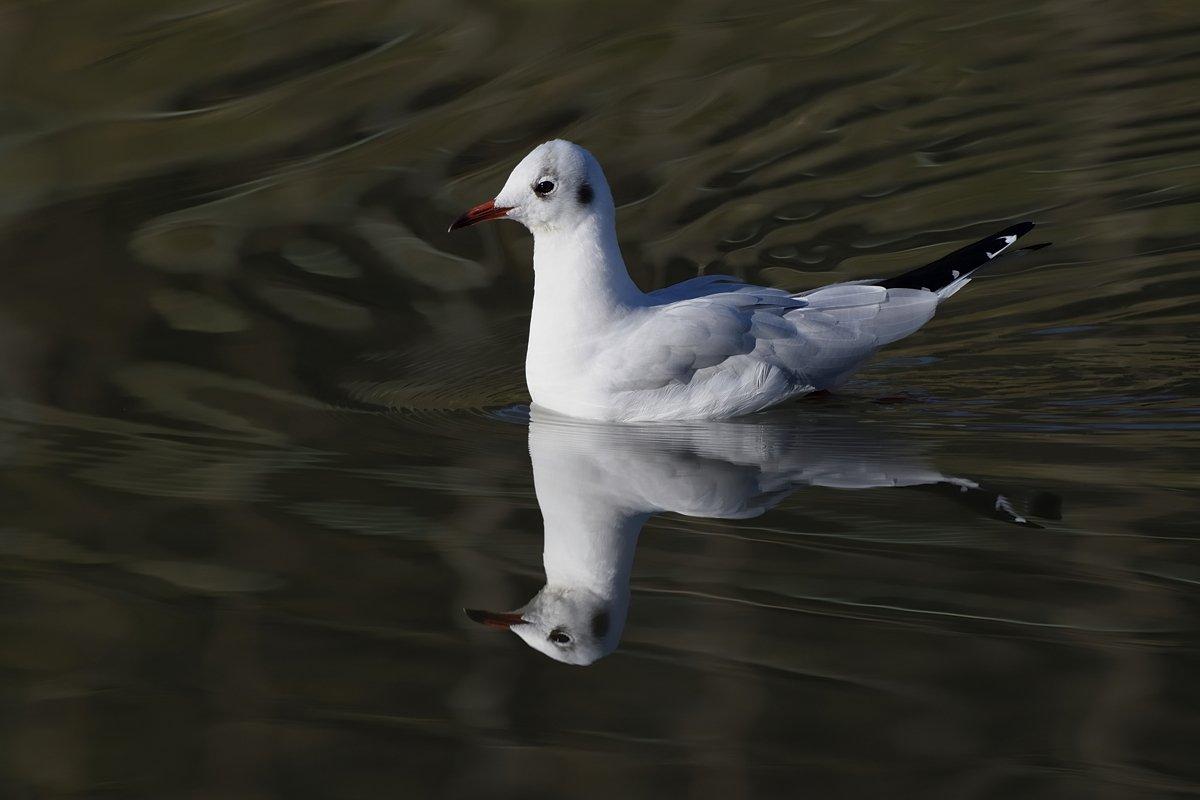 птицы, birds, Jaroslav Mego