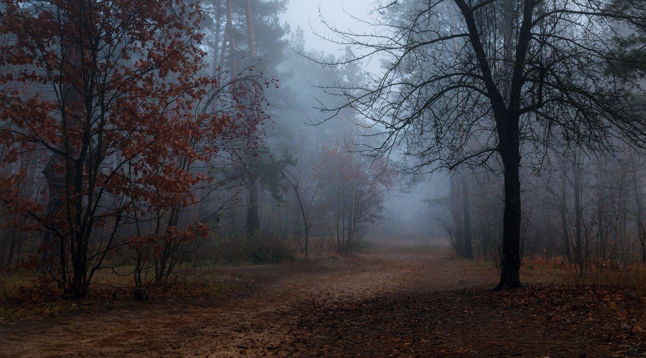 лес, осень, ноябрь, туман, сумерки, Галанзовская Оксана