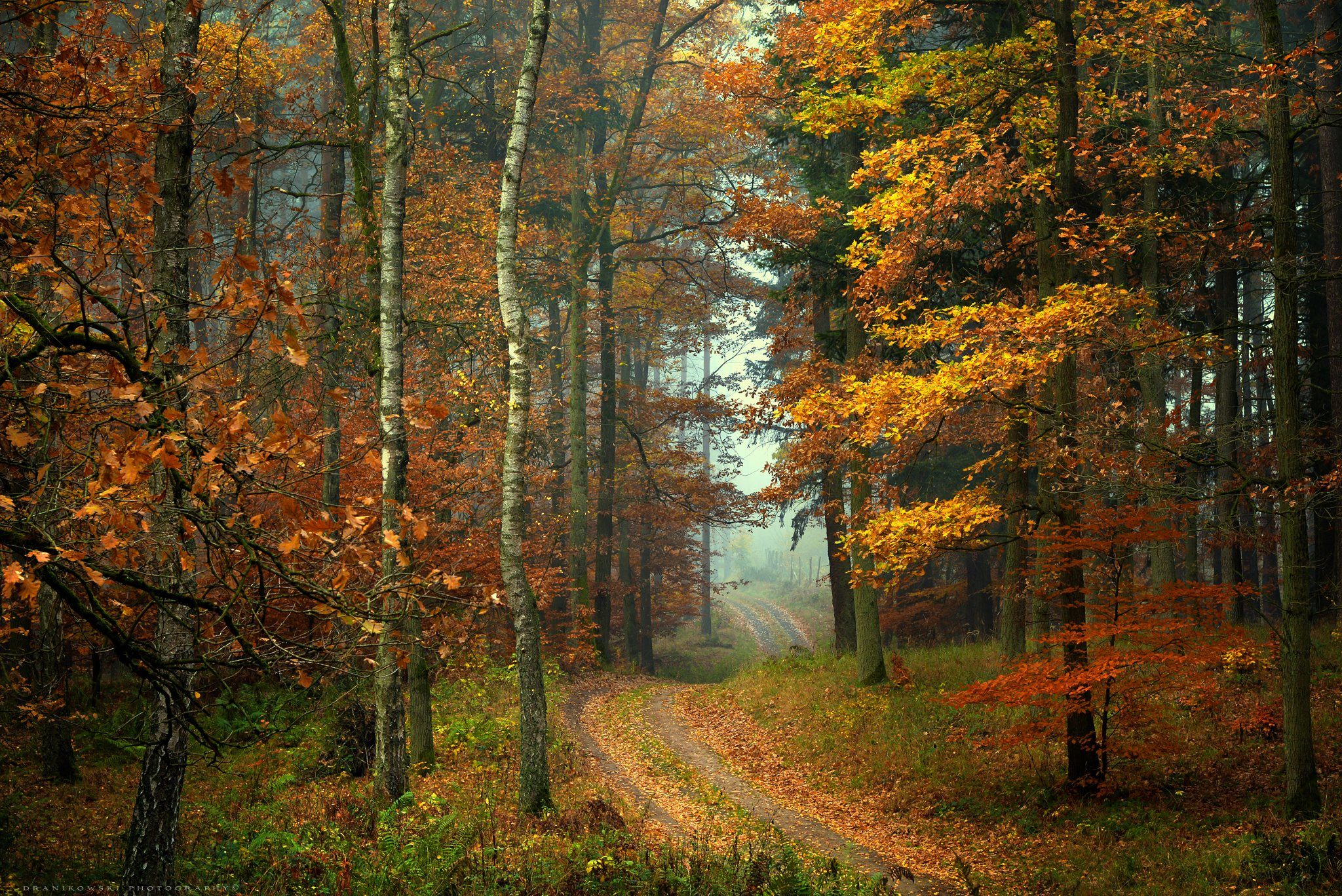 forest road path magic mist dranikowski autumn fall walk foggy droga туман trees, Radoslaw Dranikowski