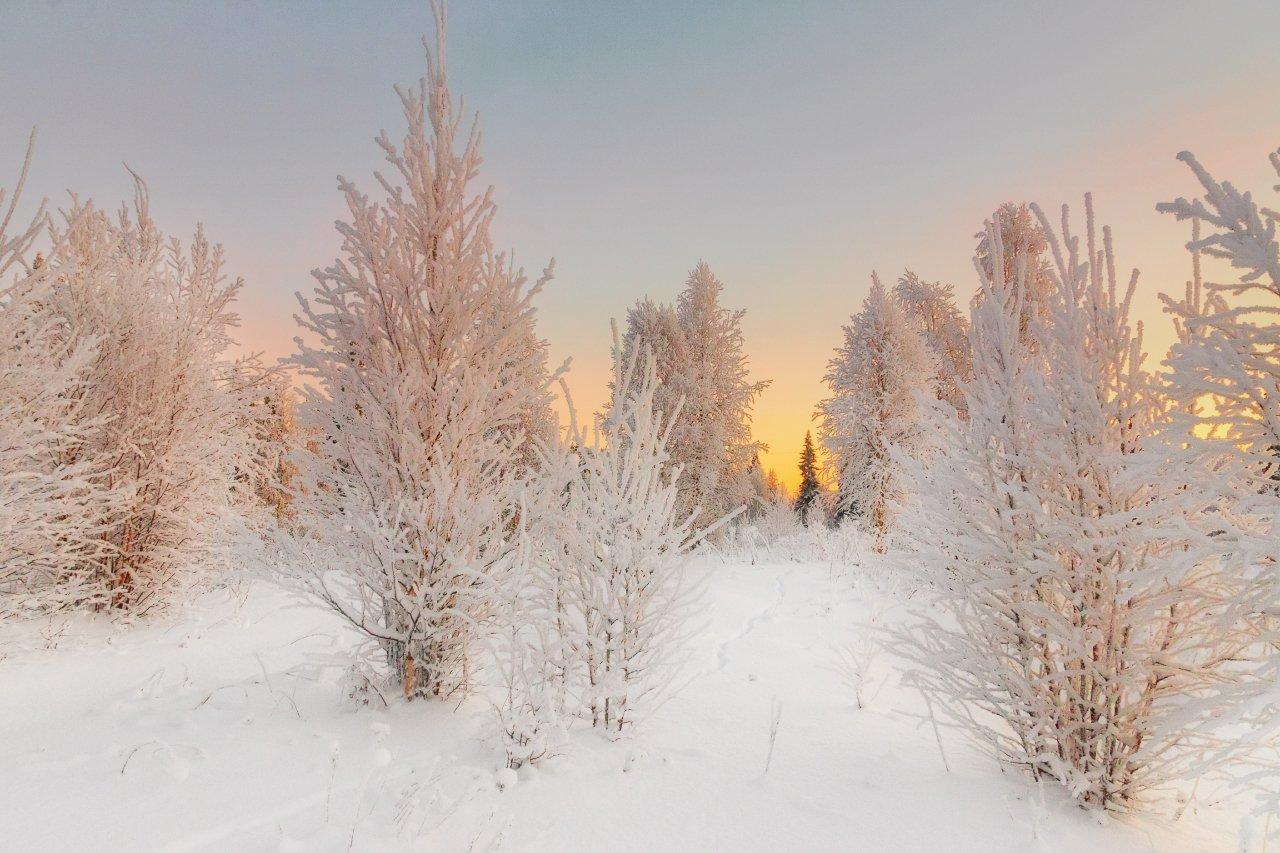 печора,солнце,зима, Игорь Подобаев