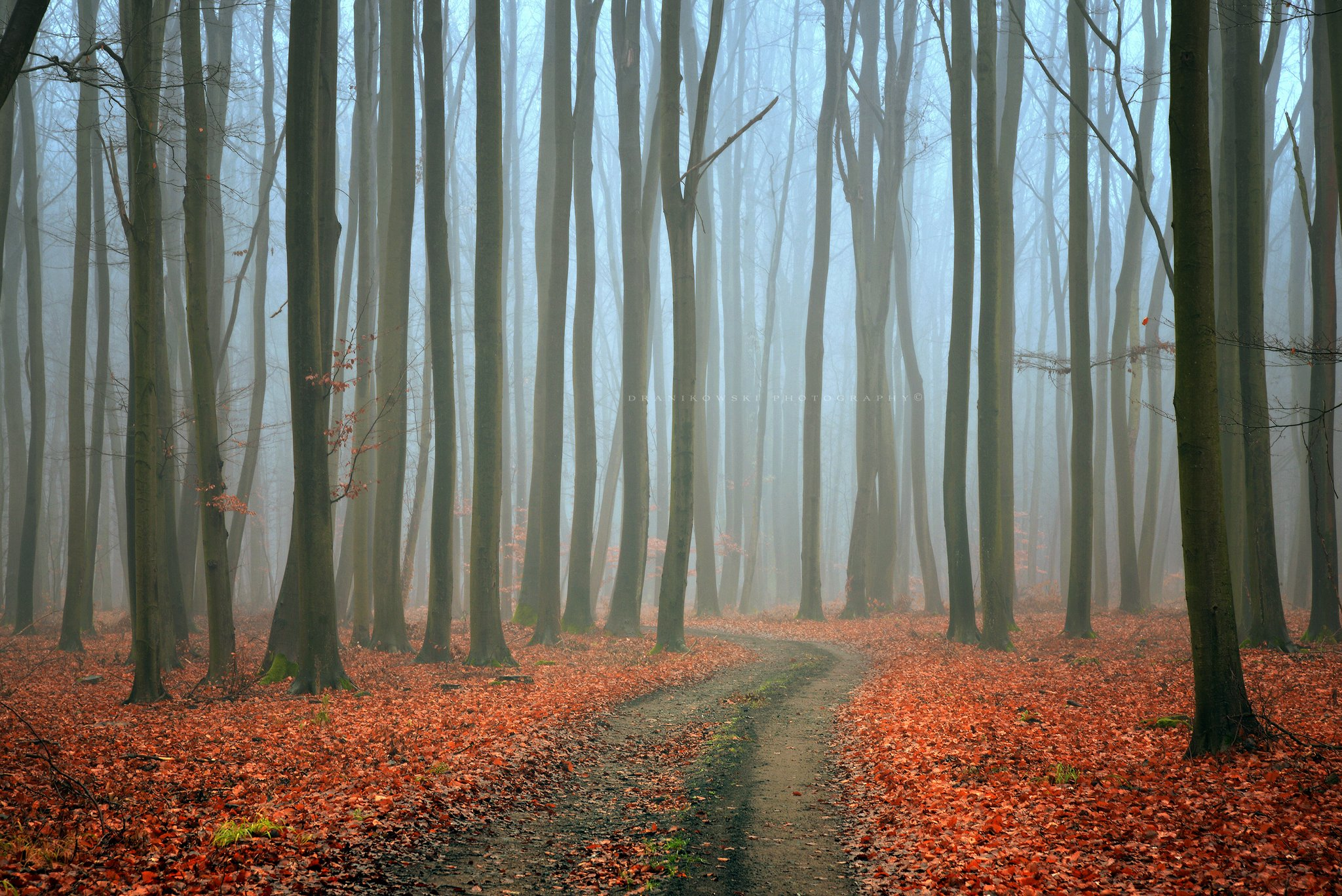 mysterious forest path road autumn fall foggy morning mist dark trees dranikowski magic, Radoslaw Dranikowski