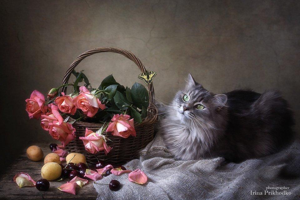 натюрморт, цветочный натюрморт, розы, кошка Масяня, домашние питомцы, бабочка махаон, фрукты, Ирина Приходько