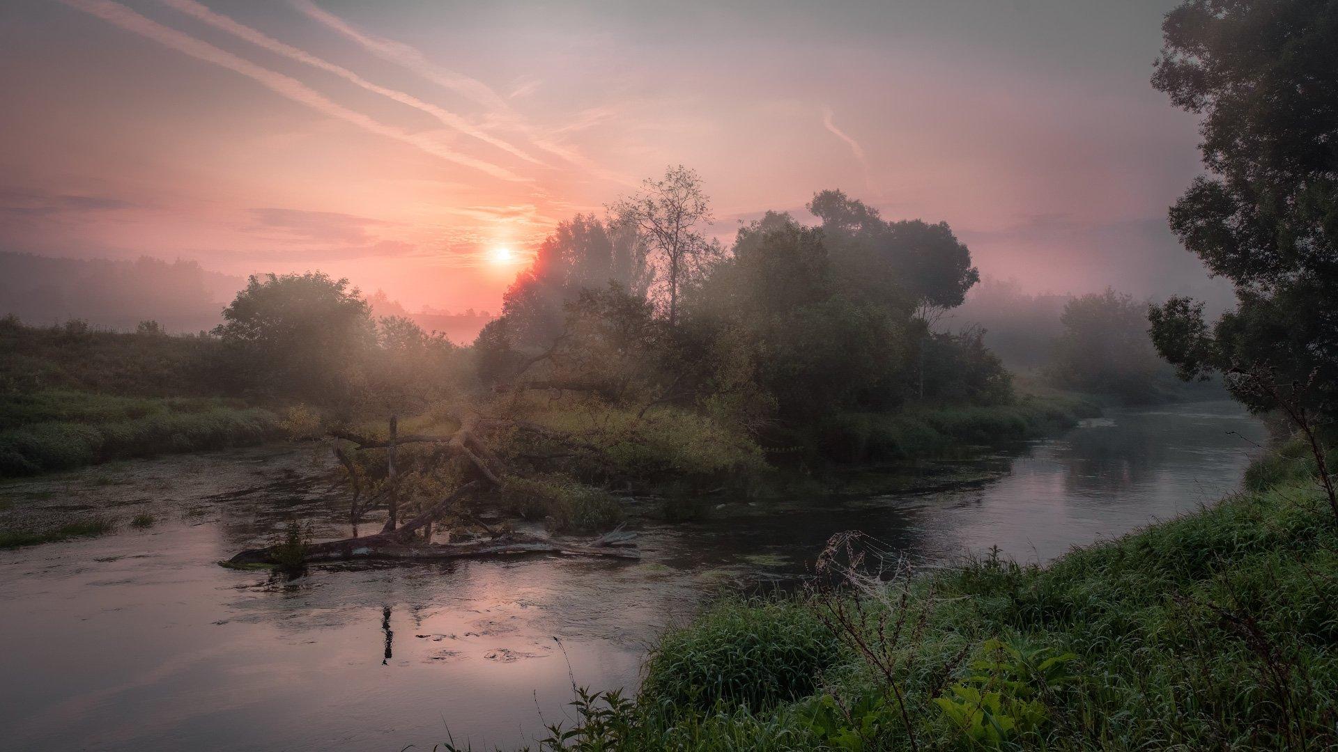 истра, река, островок, бурелом, пейзаж, рассвет, небо, следы, деревья, вода, туман, утро, Андрей Чиж