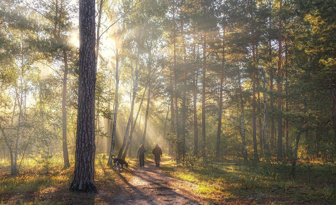 landscape, пейзаж, утро, лес,  деревья, солнечный свет,  солнце, природа, солнечные лучи,  прогулка, люди, собаки,, Шерман Михаил
