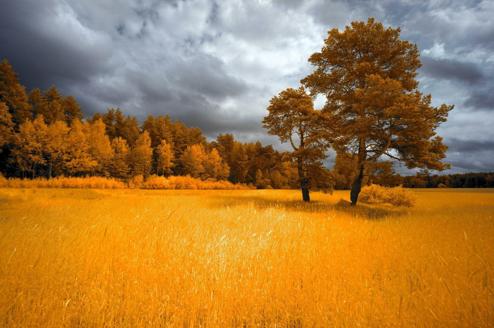 infrared,ик-фото,инфракрасное фото, инфракрасная фотография, пейзаж, лето, Sixten ( Сергей )