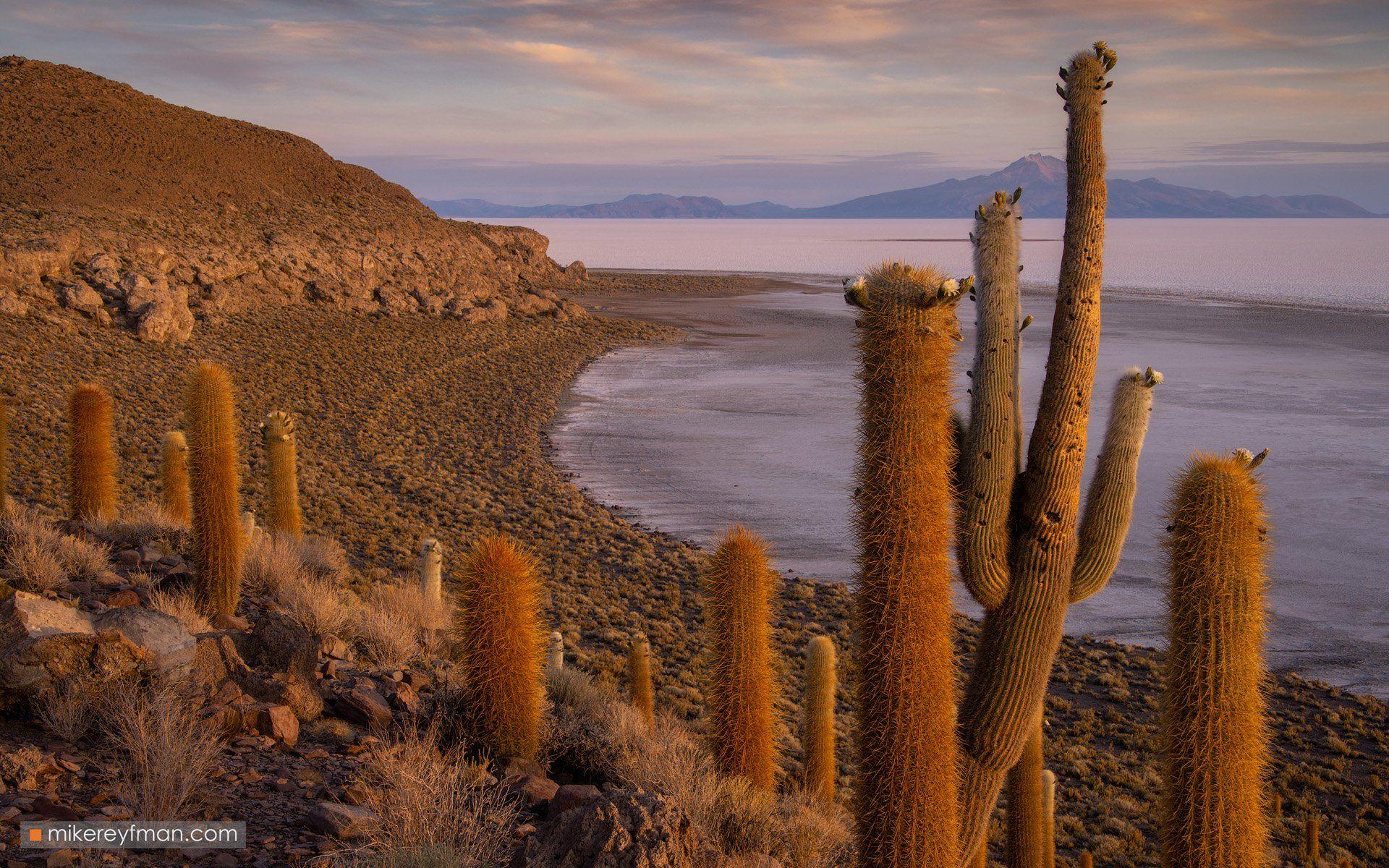 uyuni, bolivia, andes, andesmountains, cactus , southamerica, indigenous, desert, Майк Рейфман
