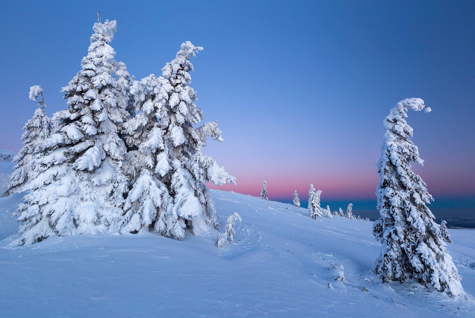 winter, trees, blizzard, snow, landscape, travel, nature, mountain, romania, cold, sunrise, Lazar Ioan Ovidiu